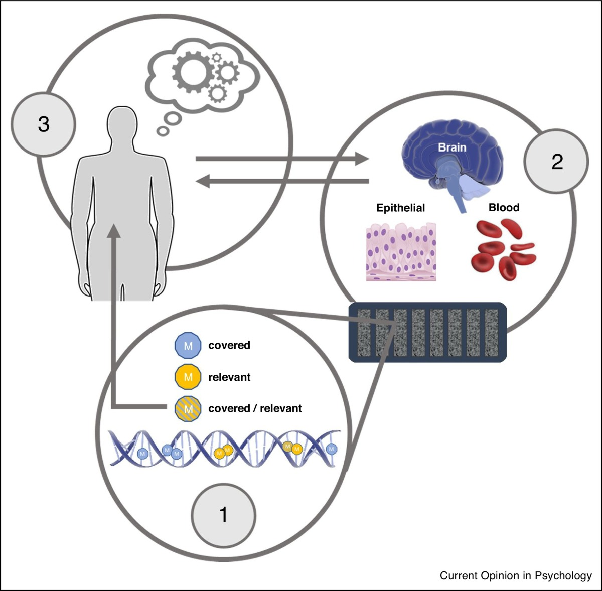 Hidden hypotheses of epigenetic studies
