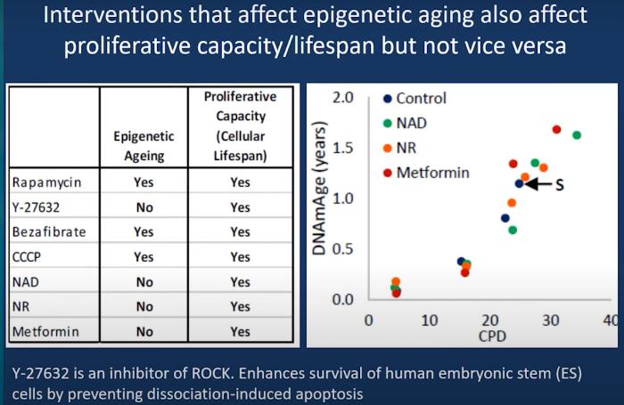 epigenetic aging vs. cellular lifespan
