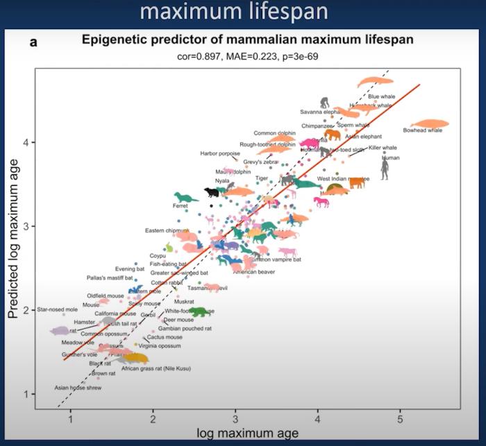 epigenetic clock mammalian maximum lifespan
