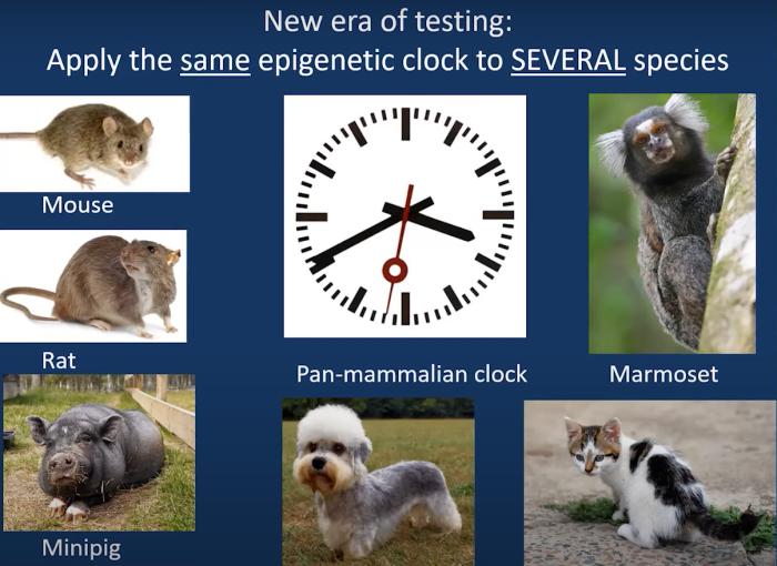 pan-mammalian epigenetic clock