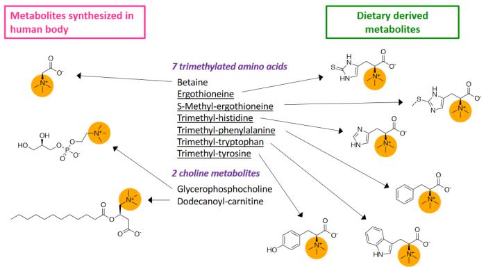 amphipathic compounds