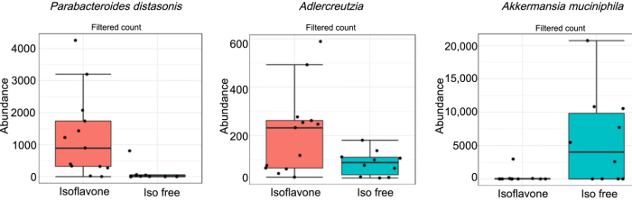 isoflavones gut microbiota