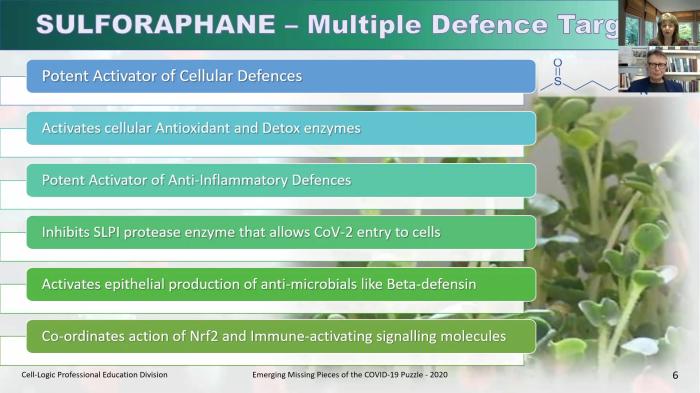 sulforaphane defense actions